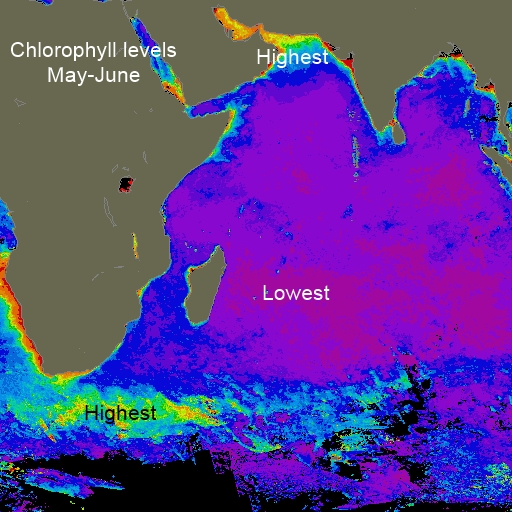 Indian Ocean chlorophyll May-Jun