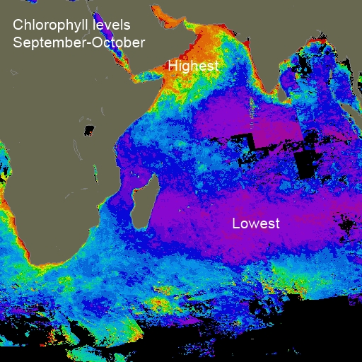 Indian Ocean chlorophyll Sep-Oct